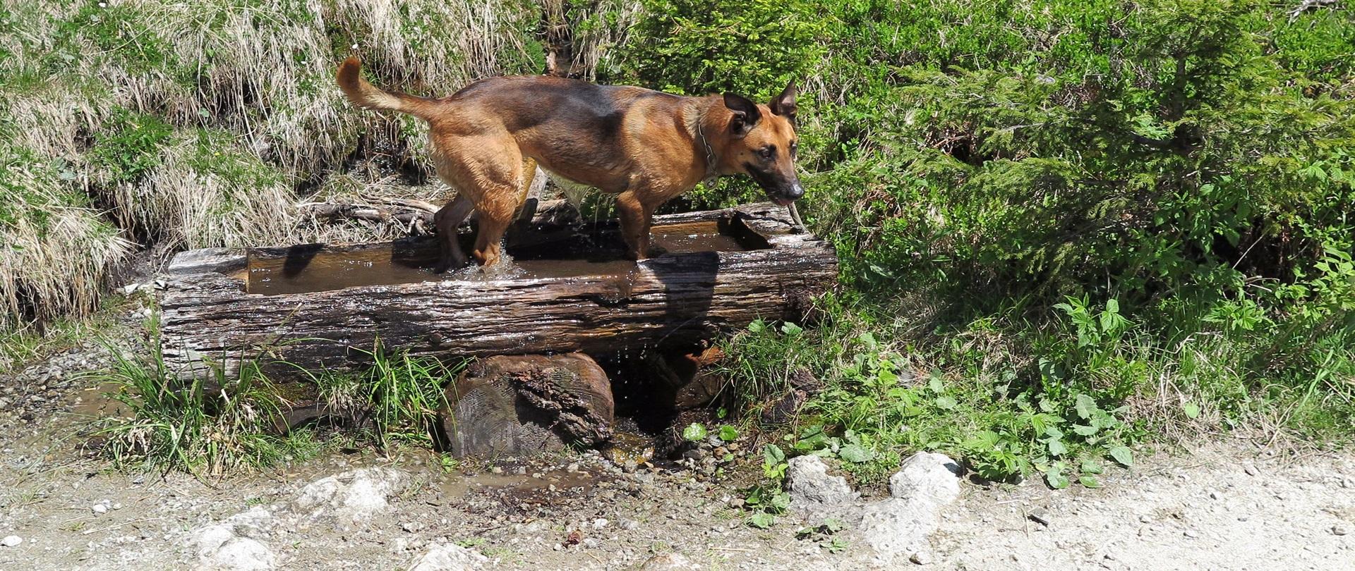 Wandertag<br>für alle Hunde